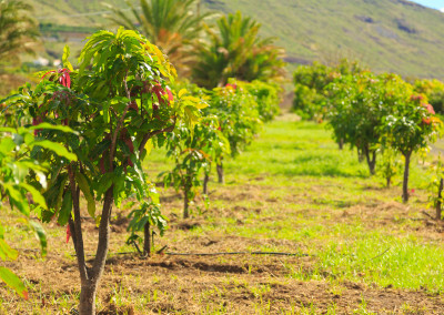 Finca La Pila - Cultivos